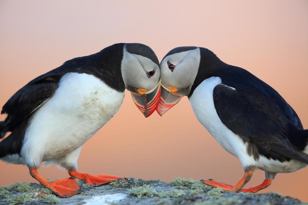 Quels animaux peut-on observer en Islande ?